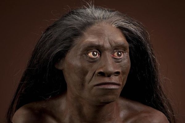 Homo floresiensis взрослая самка - модель головы