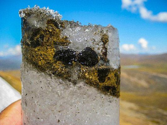 Замороженные фекалии карибу (Северного оленя)