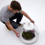 комнатные растения террариум