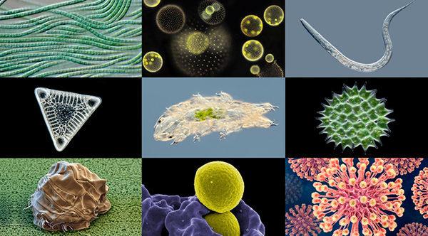 Первый в мире 'интерактивный зоопарк микробов' Micropia-музей