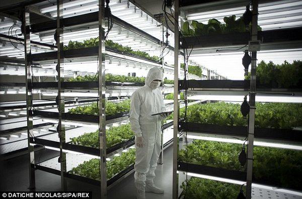 Сельского хозяйства будущего