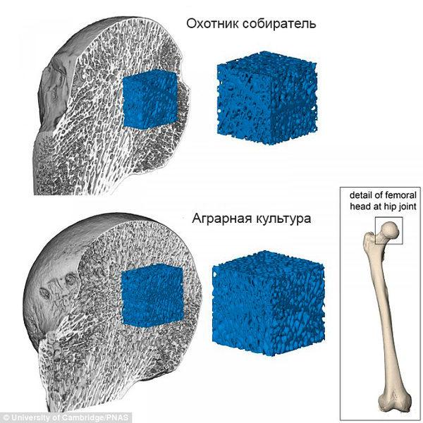 Структура древних костей