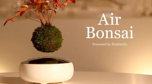 Hoshinchu Air Bonsai