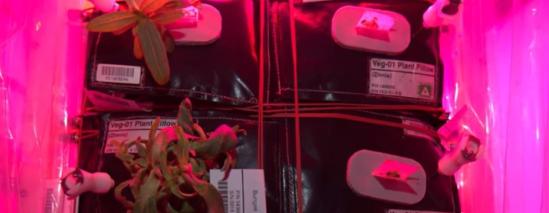 NASA испытает на МКС принципиально новые горшки для выращивания капусты